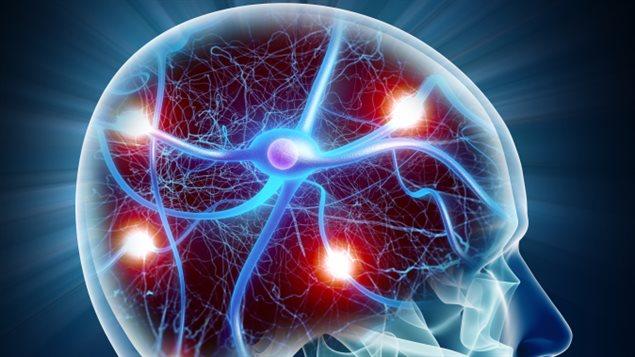 cerveau-neurone-representation